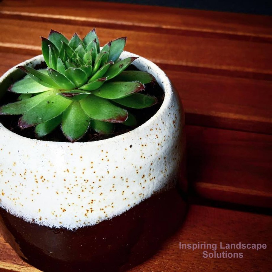 Succulent in pot for Mount Waverley balcony garden design