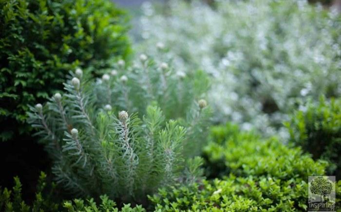 Front garden design plant cluster in Blackburn by Parveen Dhaliwal
