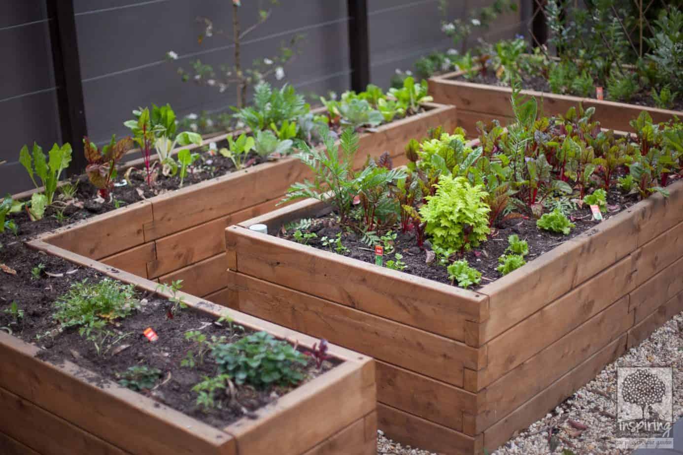 Urban food garden in productive part of Blackburn landscape design by Inspiring Landscape Solutions