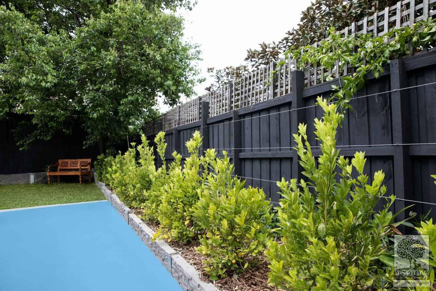 Edible garden design using a cumquat hedge in the backyard of a Camberwell property in Melbourne