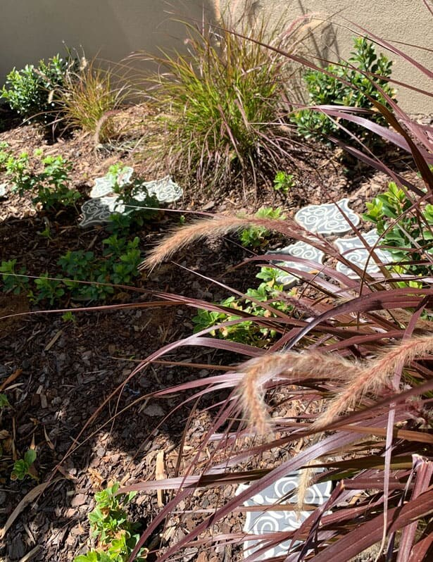 Wispy grasses and groundcover in Hawthorn East front garden design