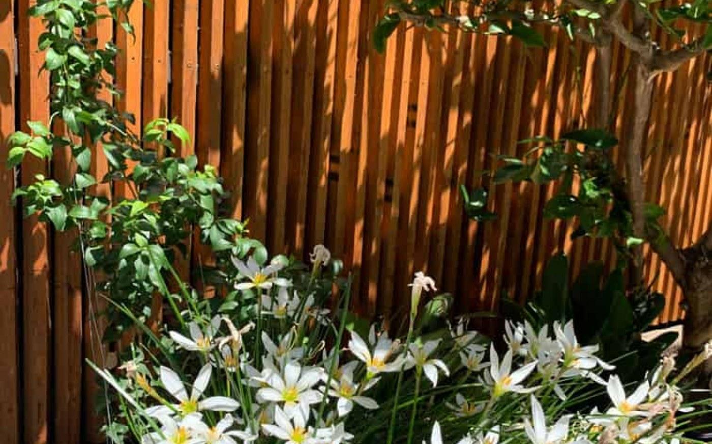White flowers in Hawthorn East garden design