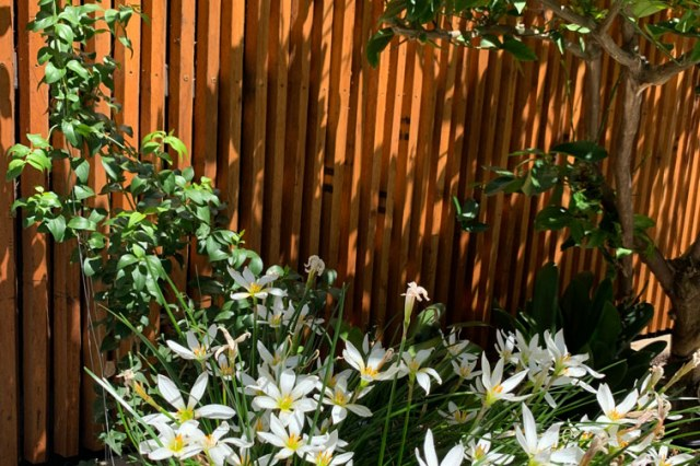 White flowers in Hawthorn East garden design