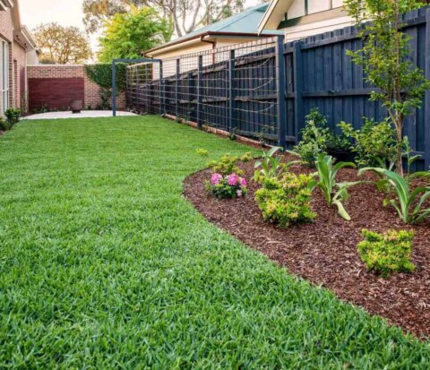 Green lawn surrounded by garden beds in Surrey Hills landscape design by Parveen Dhaliwal