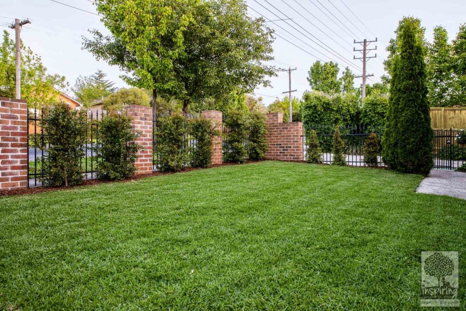 Green lawn surrounded by hedges in Surrey Hills garden design by Parveen Dhaliwal