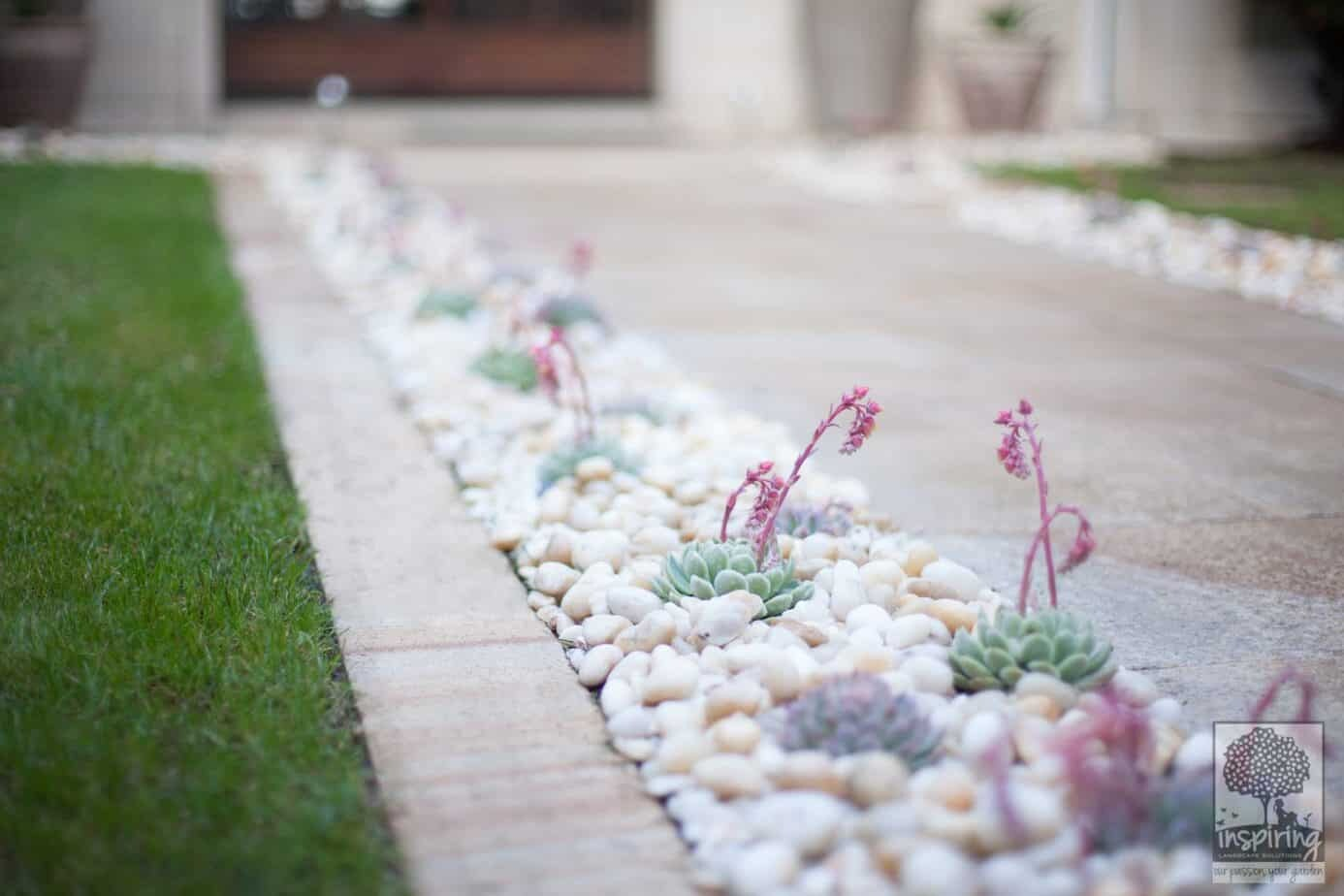 Closeup of succulents used in Brighton garden design front entry path