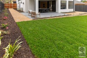 Closeup of backyard grassed area in Burwood landscape design by Parveen Dhaliwal