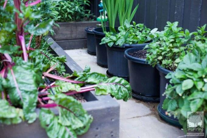 Urban food garden in productive part of Bundoora landscape design