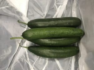 Picture of cucumber for your productive garden landscape design