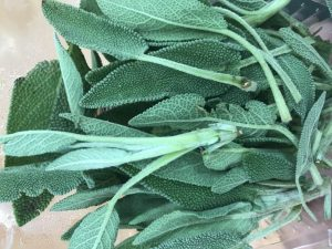 Picture of sage for your productive garden landscape designg Landscape Solutions Melbourne