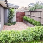 Acacia's used in side garden in Ashburton garden design
