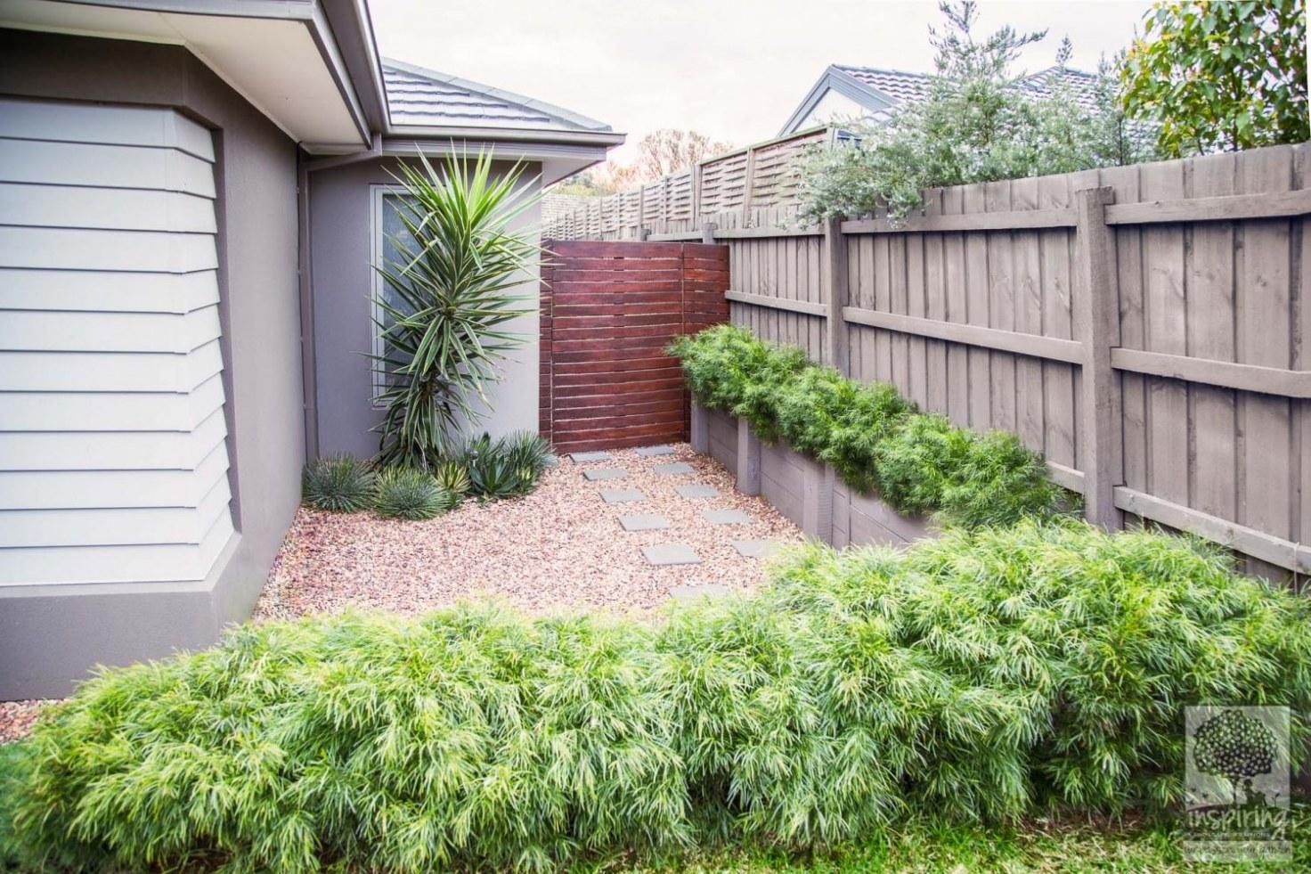 Acacia's used in side garden in Ashburton garden design
