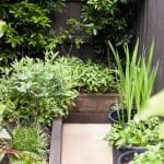 Urban food garden in Bundoora landscape design