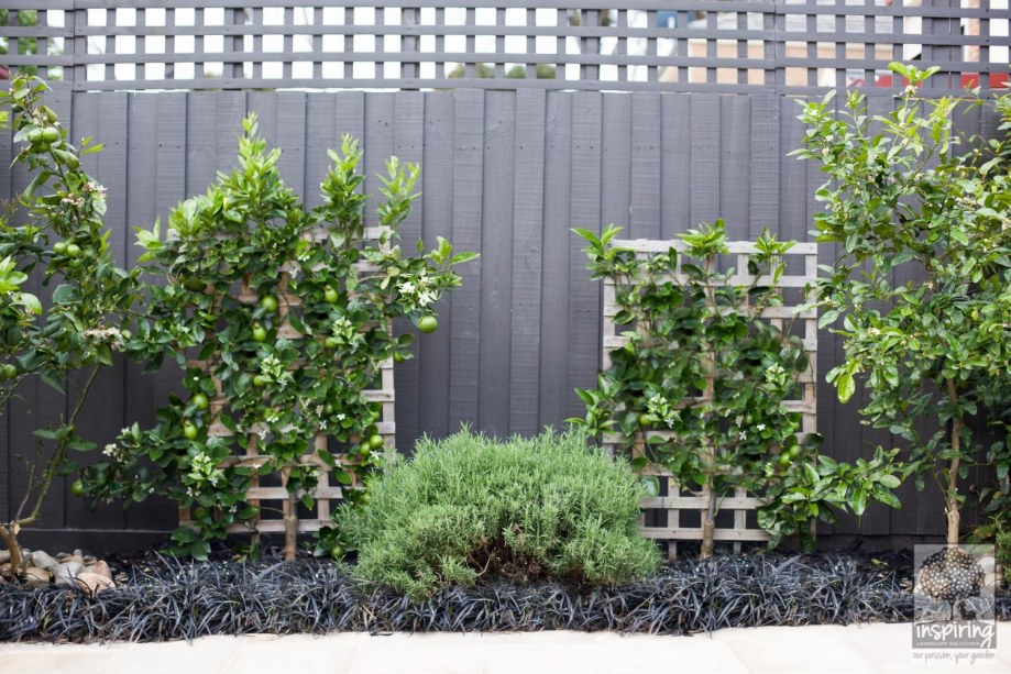 Closeup of dwarf fruit trees and espaliers in Kew landscape design