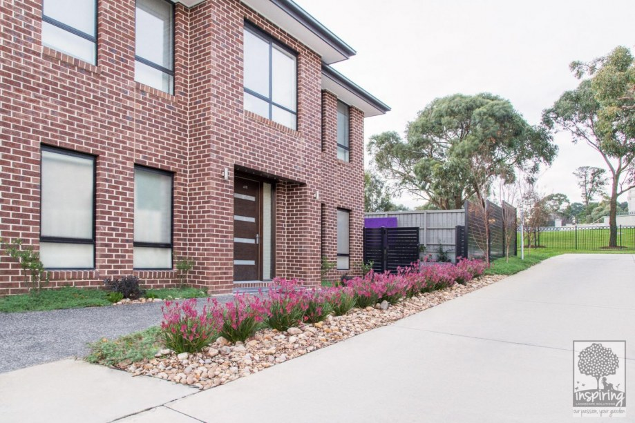 Front garden of Wantirna garden design with dwarf pink kangaroo paws