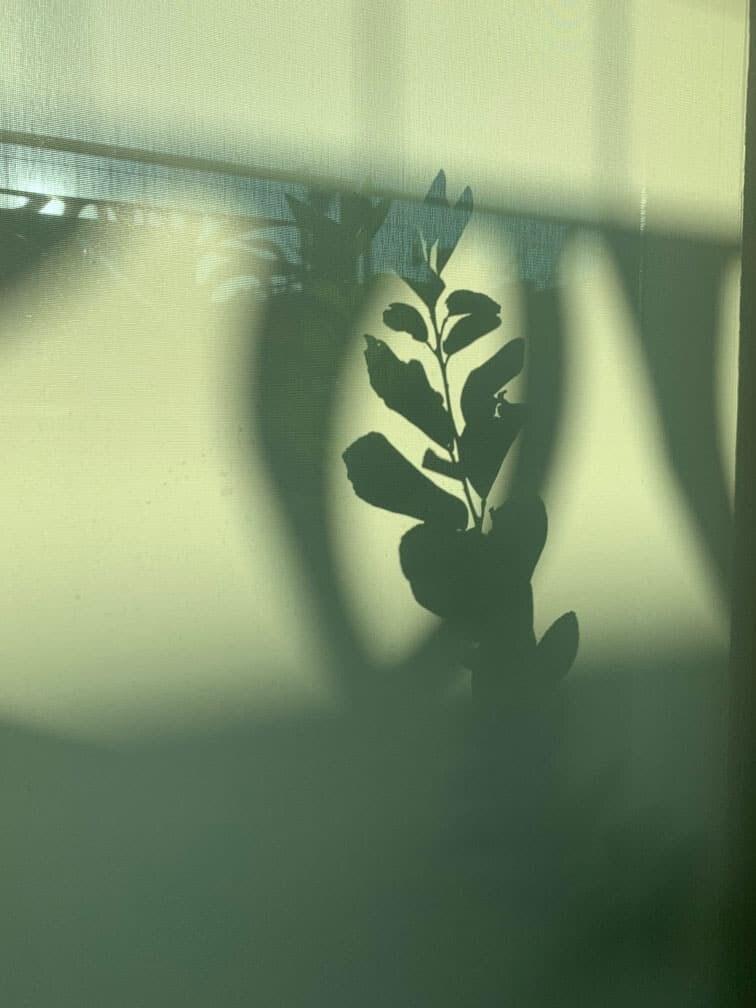Shadows in the garden in Hawthorn garden design by Inspiring Landscape Solutions